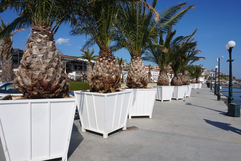 Palm trees ready to be put in their places